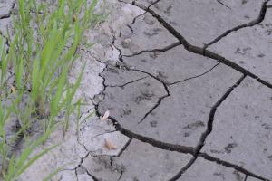 droogte – en hemelwatercoördinator