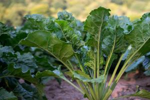 Alles over droogte en de invloed op uw bemestingsstrategie