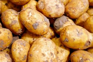 aardappelmot en de aardappelbladvlo.