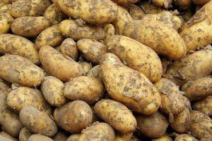 Aardappelrassen