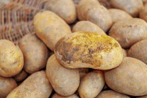 Aardappelen doen omzet akkerbouw met bijna 1/5 dalen