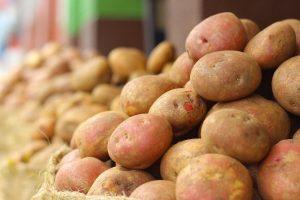 Aardappel als eiwitbron, is dat de toekomst?