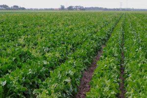 Landbouwsector