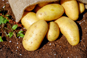 Belgische aardappelindustrie verwerkt 4 pct minder in 2020