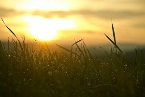 Uitgebreidere dossiersamenstelling voor West-Vlaamse klasse 1 bedrijven in agrarisch gebied