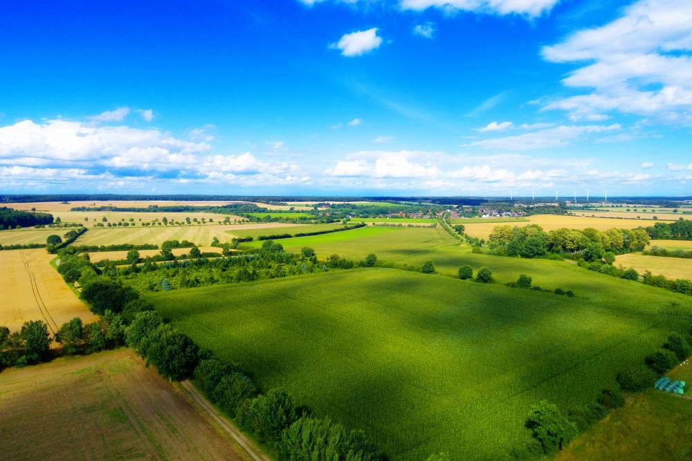 Wetenschappers pleiten voor toestaan nieuwe veredelingstechnieken in Europa's biologische landbouw