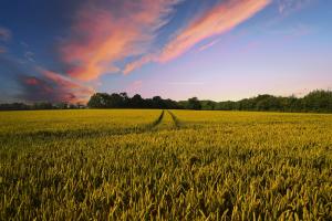 Een inkijk in de wereld van de rassenlijst voor landbouwgewassen