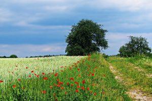 Pre-ecoregelinge: Kruidenrijk grasland en ecologisch beheerd grasland