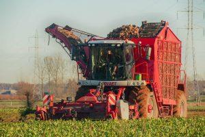 Belgisch loonbedrijf rooit eerste voederbieten