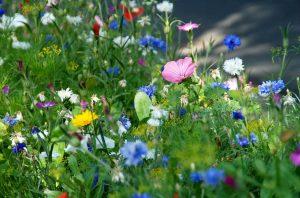 Vrijwillige maatregelen om de biodiversiteit te beschermen